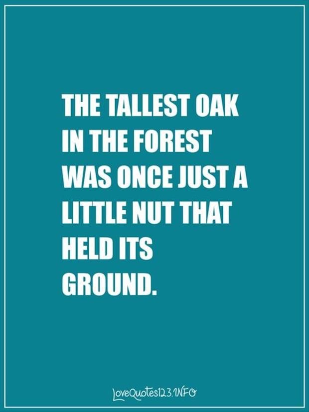 The tallest oak in the forest was once just a little nut that held it's ground
