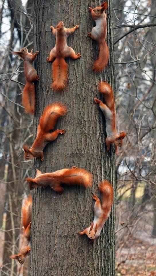 squirrels at a rave